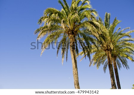 Palm trees against a blue sky.