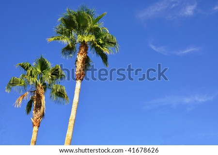 palm trees against a pretty blue sky room for your text - stock photo