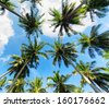 Palm trees against blue sky. - stock photo