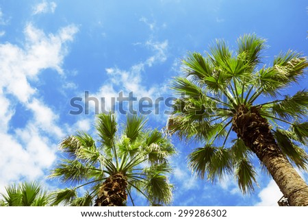 Palm trees against blue sky with clouds. - stock photo