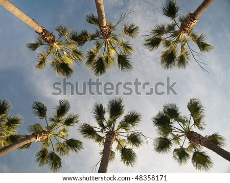Palm trees against blue sky with clouds in the city of Los Angeles - stock photo