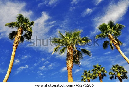 palm trees against bright blue tropical sky - stock photo