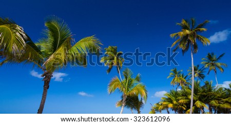 Palm trees against clear blue sky - stock photo