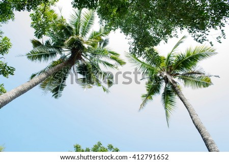 Palm trees against sky - stock photo