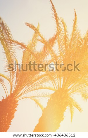 Palm trees against sky. retro toned image. travel, summer, vacation and tropical beach concept. - stock photo