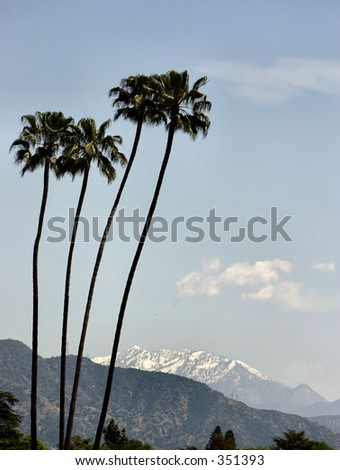 Palm trees against snowy mountains. - stock photo