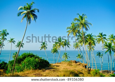 Palm trees against the sea - stock photo