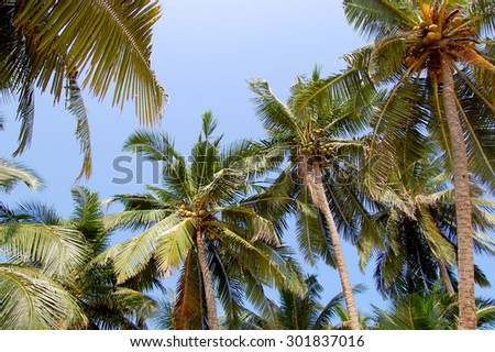 palm trees against the sky - stock photo
