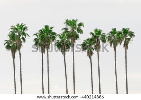 Palm trees against the sky