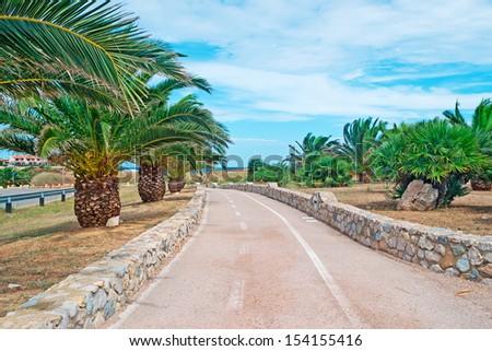 palm trees along a cycling lane - stock photo
