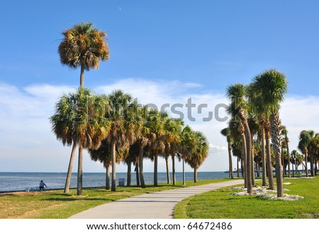 Palm trees alongside a beach walkway in St. Pete, Florida - stock photo