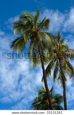Palm trees and blue sky with white clouds behind - stock photo