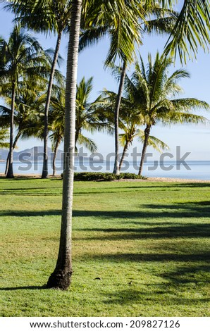 Palm trees and lawns at Townsville, Queensland, Australia with Magnetic Island in background. First palm is in sharp focus. - stock photo