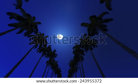 Palm trees and moon in night - stock photo