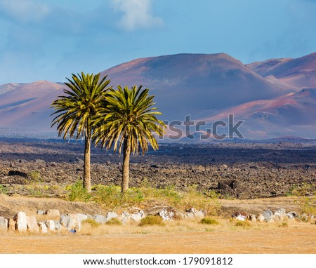 Palm trees and mountain in Lanzarote Punta Papagayo at Canary Islands - stock photo