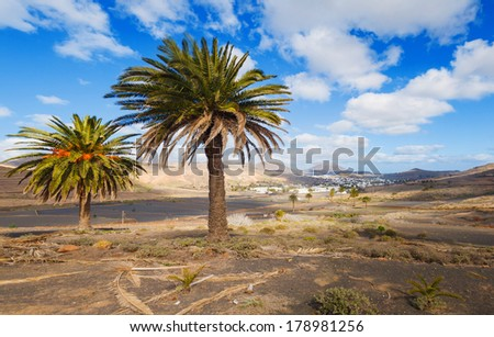 Palm trees and mountain in Lanzarote Punta Papagayo at Canary Islands. Panorama - stock photo