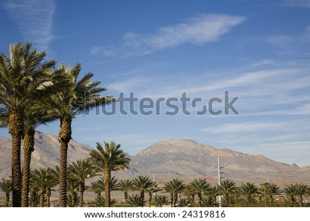 palm trees and mountains in las Vegas - stock photo