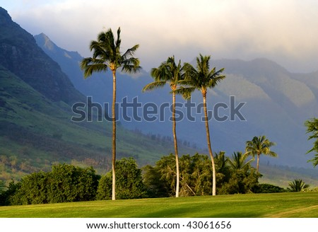 Palm trees and mountains on Oahu, Hawaii