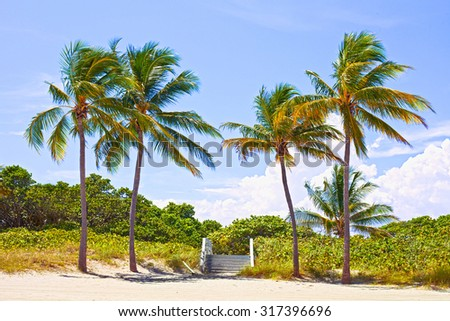 Palm trees and pathway to the sand on a beautiful sunny summer afternoon in Hollywood Beach near Miami Florida with ocean and blue sky in the background - stock photo