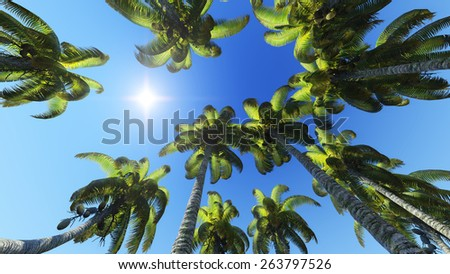 Palm trees and sun is shining bottom view - stock photo