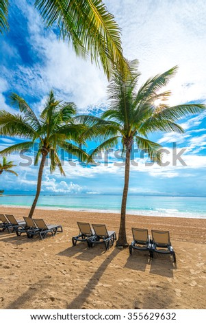 Palm trees and the lounges at caribbean, tropical beach. Vertical.