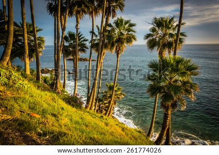 Palm trees and view of the Pacific Ocean, at Heisler Park, in Laguna Beach, California. - stock photo