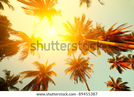 Palm trees and yellow sun in a sky - stock photo