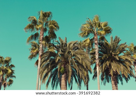 Palm trees at Santa Monica beach.  - stock photo