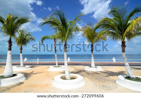 Palm trees at sea embankment along pathway for running - beautiful tropical background - stock photo