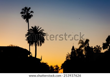 Palm trees at sunset, at Balboa Park, in San Diego, California.