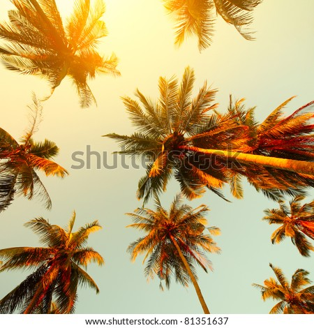 Palm trees at sunset light - stock photo