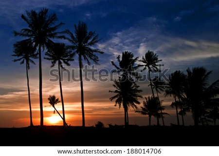 Palm trees at sunset, Vietnam