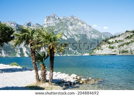 Palm trees at the beach of Lake Garda in Torbole (Italy) - stock photo