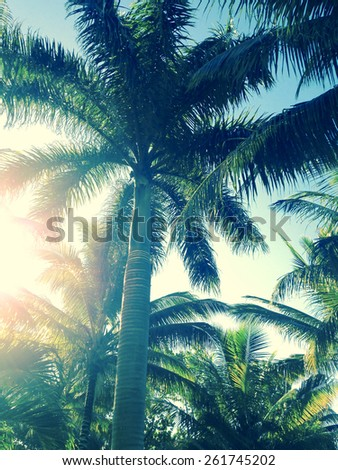 Palm trees at tropical coast, soft focus, vintage toned - stock photo