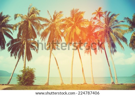 Palm trees at tropical coast, vintage toned and stylized - stock photo