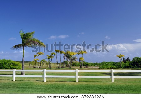 palm trees behind a white fence  - stock photo