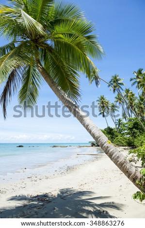Palm trees cast shadows on rustic remote tropical Brazilian island beach in Bahia Nordeste Brazil - stock photo