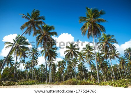 palm trees forest on the beach of punta cana in dominican republic - stock photo