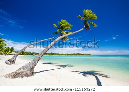 Palm trees hanging over stunning lagoon with blue sky - stock photo