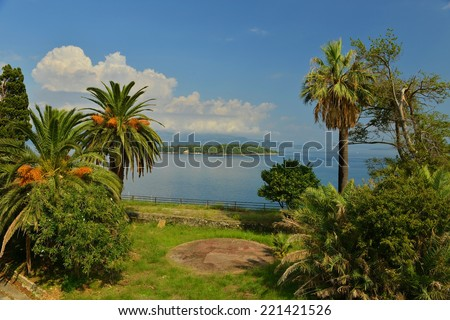 palm trees in Corfu, Greece - stock photo