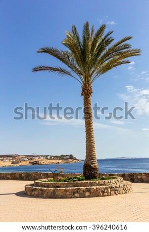 Palm trees in Egypt against blue sky