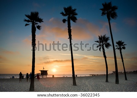 palm trees in sunset in Los Angeles at the pacific ocean - stock photo