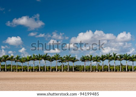 Palm trees in the Agricultural and Rural Development Zones just east of  Everglades National Park near Homestead, Florida - stock photo