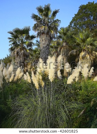 Palm trees in the arboretum Sochi