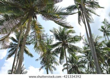 palm trees in the sunlight and blue sky - stock photo