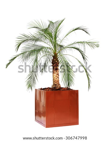 Palm Trees Vase Palm Palm Trees Stock Photo Royalty Free 306747998