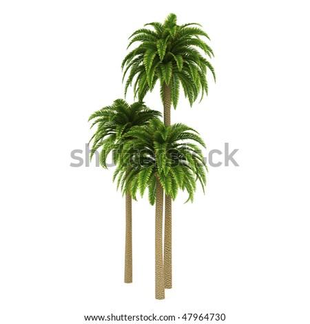 Palm trees isolated on white background - stock photo