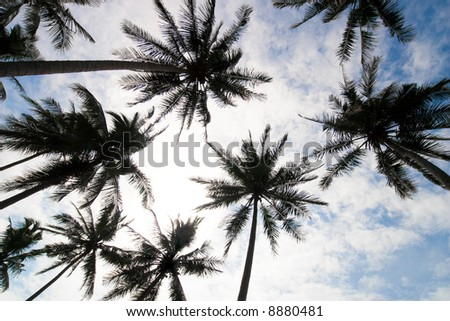 palm trees low angle - stock photo