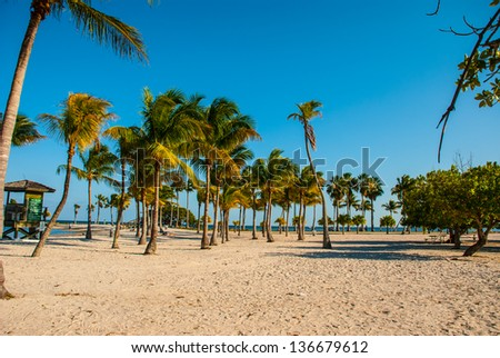 Palm trees Miami beach - stock photo