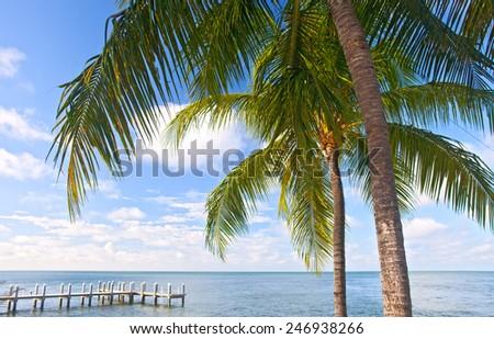 Palm Trees Ocean And Blue Sky On A Tropical Beach In Florida Keys Near Famous